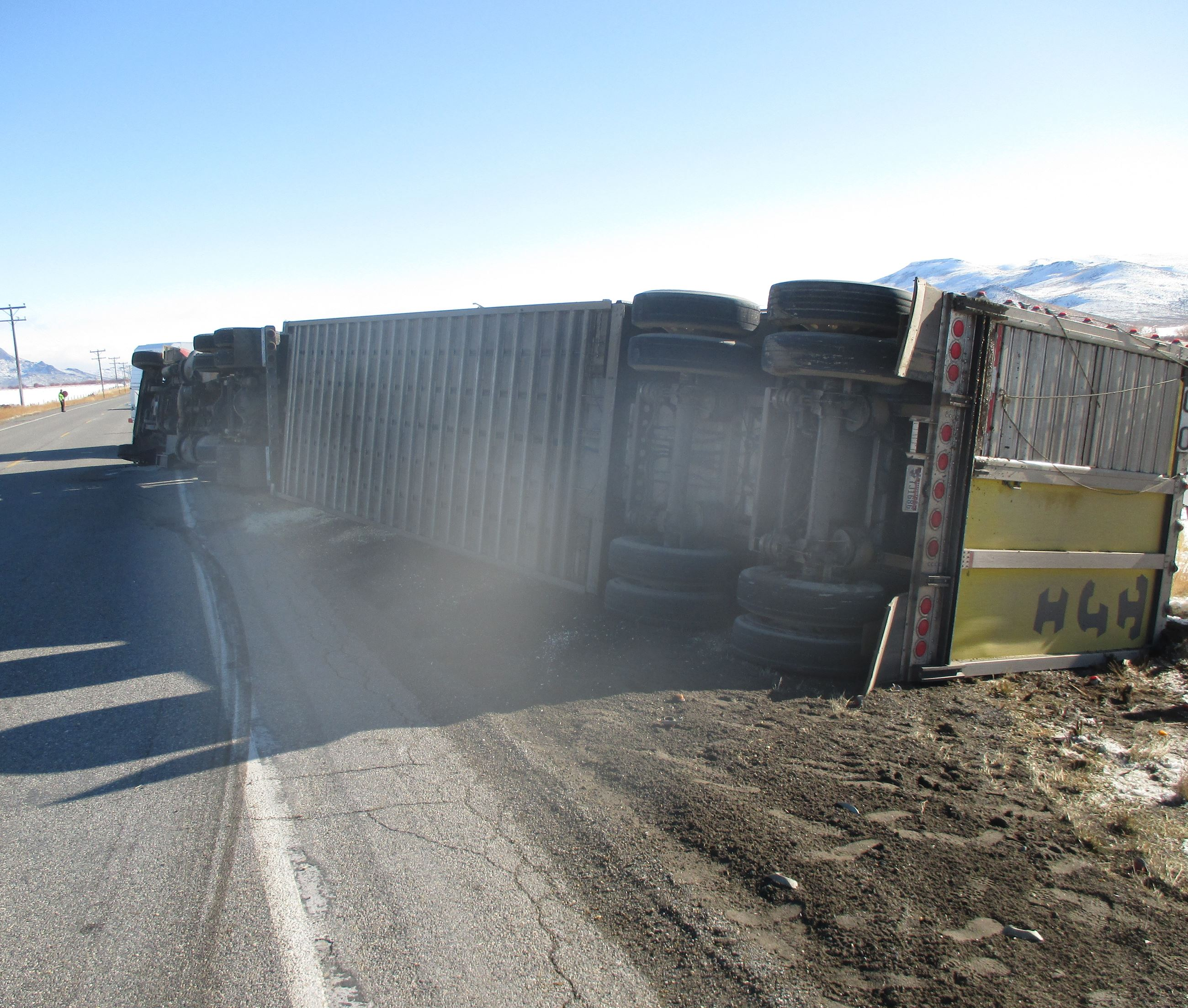 Cattle Truck Crash